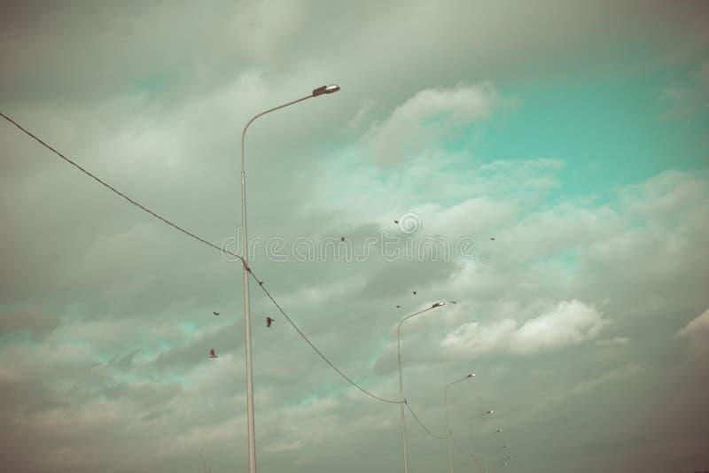 На предпосылке голубого неба с облаками белизны птицы летают 5 из их во всех 5 птицах, возможно ворон или голубей стоковая фотография