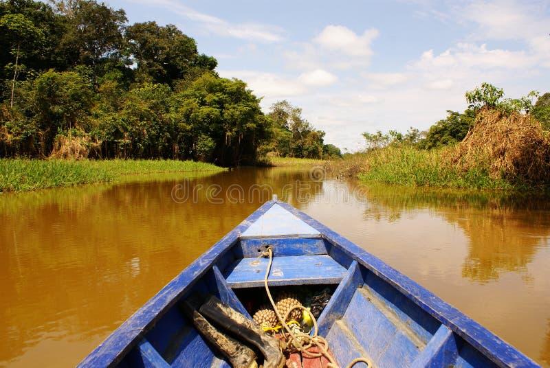 На пути идти удя в реке джунглей Амазонки, во время последней после полудня, в Бразилии. стоковые фото