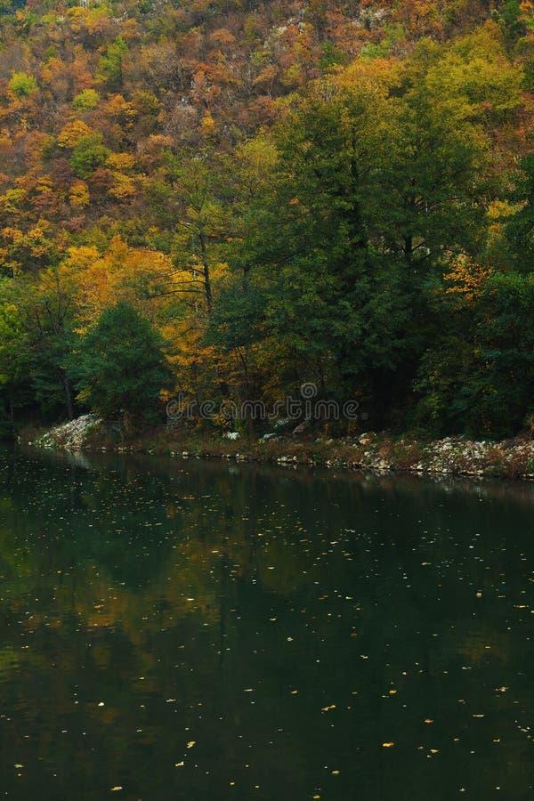На реке стоковые изображения