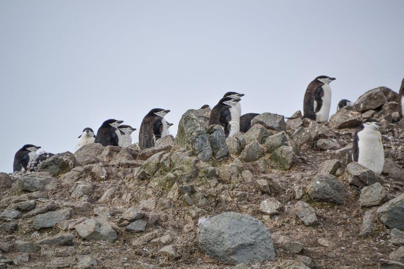 На склоне холма стоят пингвины из чертежа стоковые фото