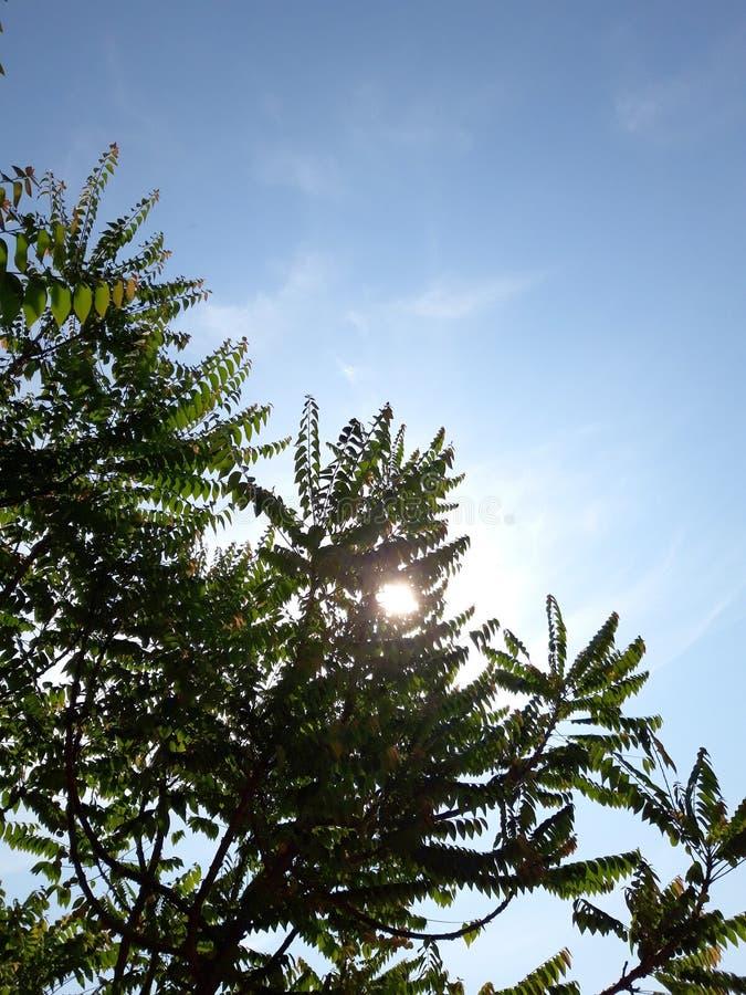 на солнечный день стоковые изображения