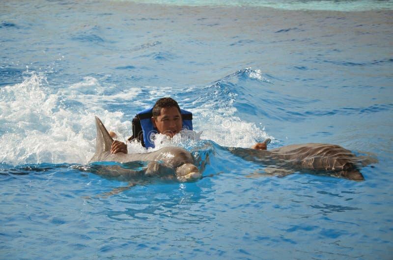 Надфюзеляжная езда - дельфины стоковые фотографии rf