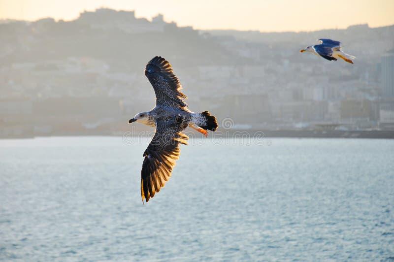 над чайками моря стоковые изображения rf