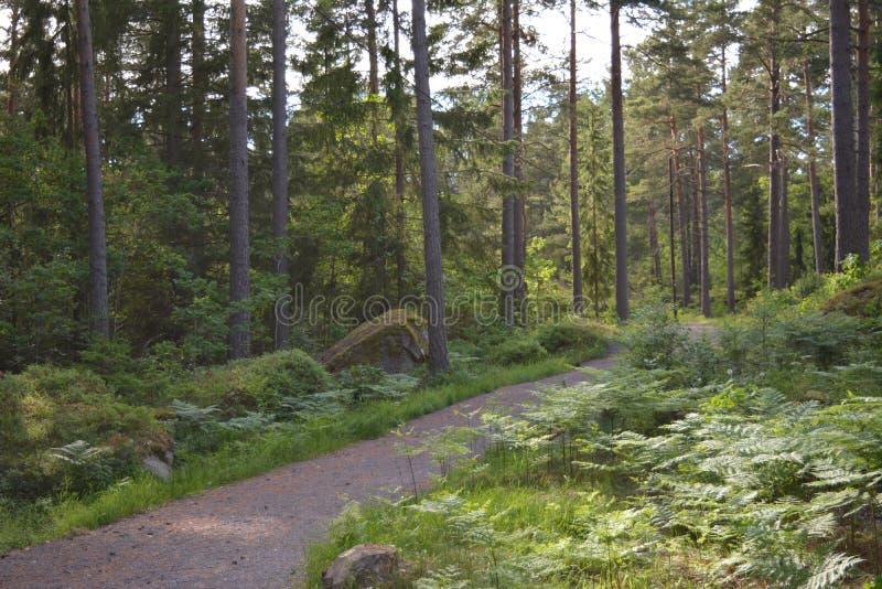 На greenway в Швеции стоковое изображение rf