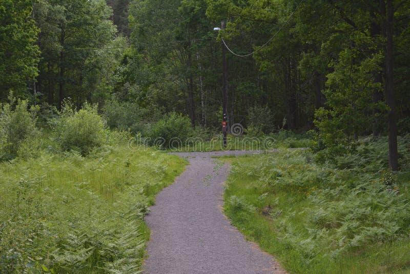 На greenway в Швеции стоковое фото rf