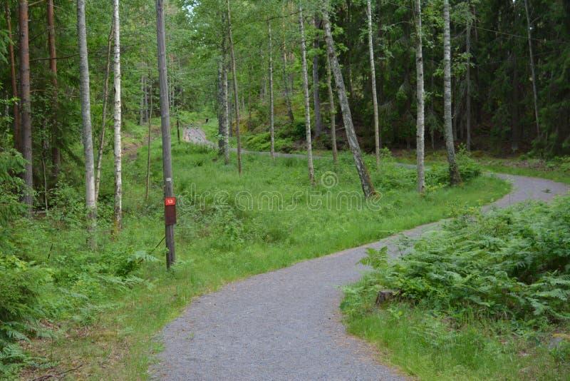 На greenway в Швеции стоковые фотографии rf