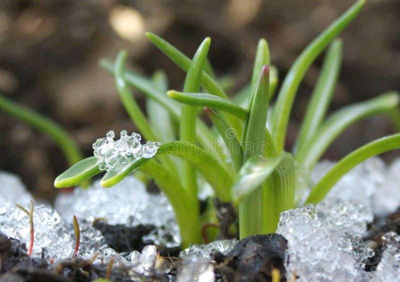 На parting зиме украшает разбуженные заводы с чистыми диамантами льда стоковые фото