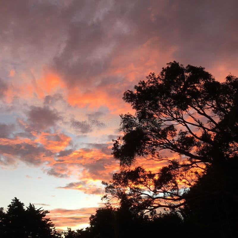 Небеса Firey стоковая фотография