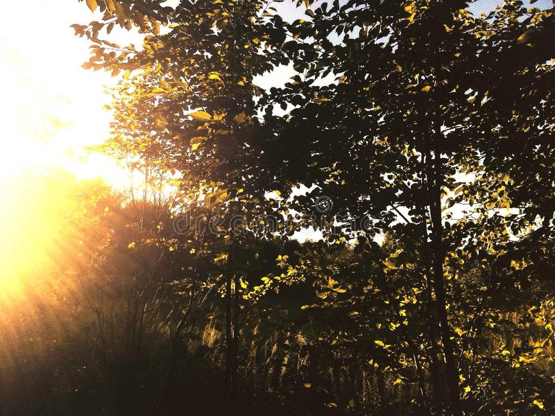 небесный свет стоковые изображения rf