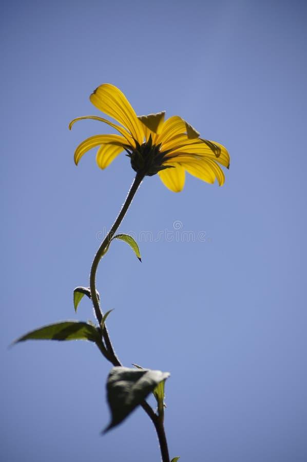 Небесный цветок стоковые изображения