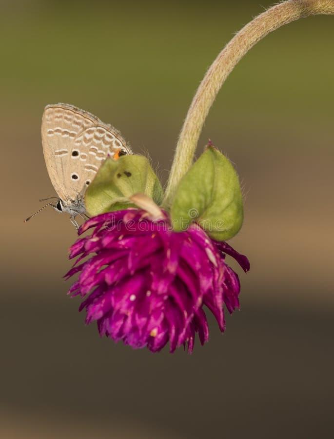 Небольшая бабочка стоковая фотография