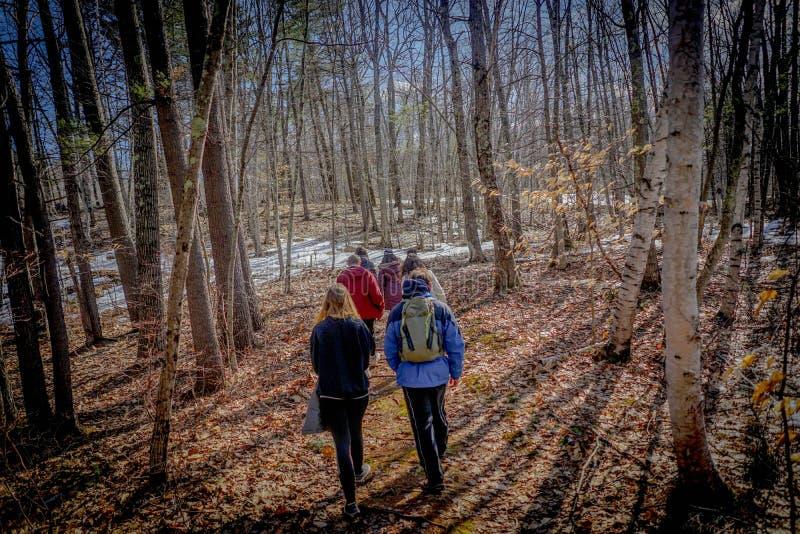 Небольшая группа hikers идя в лес на зиме стоковое фото rf