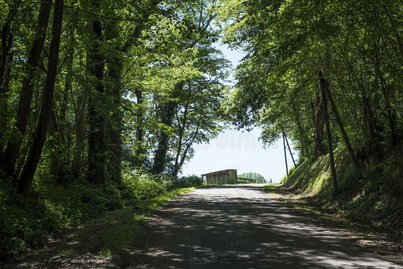 Небольшая замотка дороги через французский лес стоковое изображение