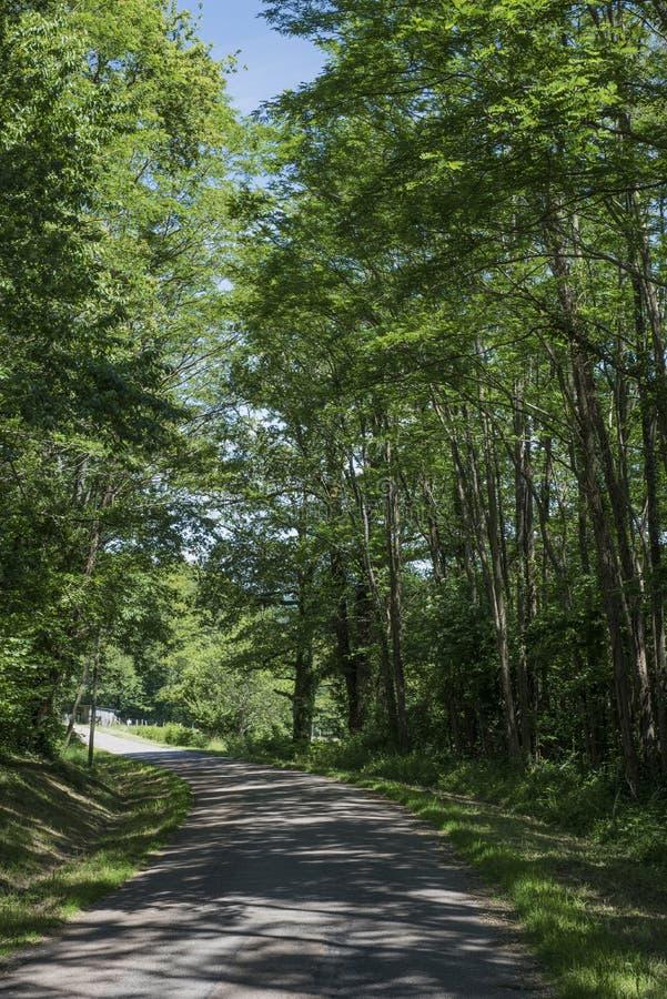 Небольшая замотка дороги через французский лес стоковое фото