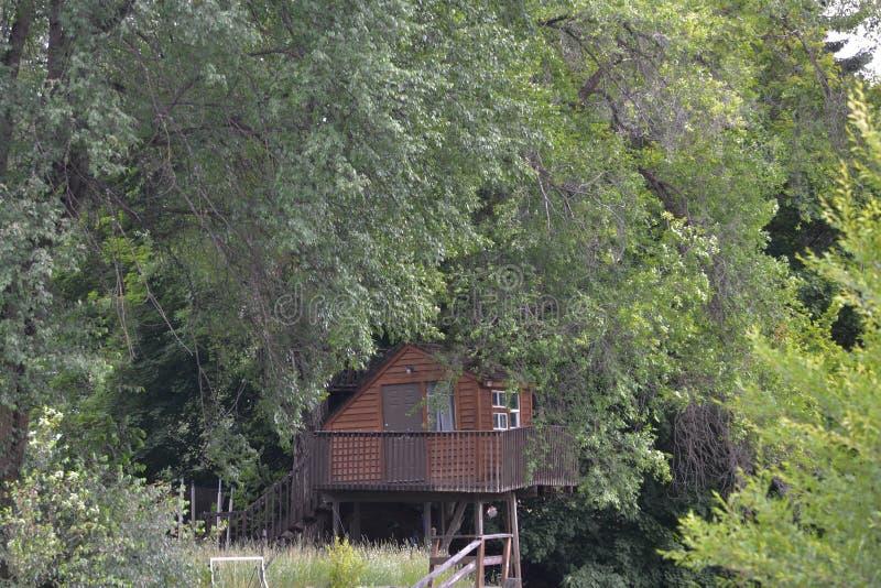 Небольшая кабина в древесинах стоковое изображение