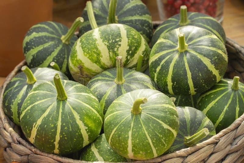 Небольшие зеленые striped тыквы в плетеной корзине, предпосылка обоев конца-вверх Сбор тыкв, овощи в корзине стоковые изображения