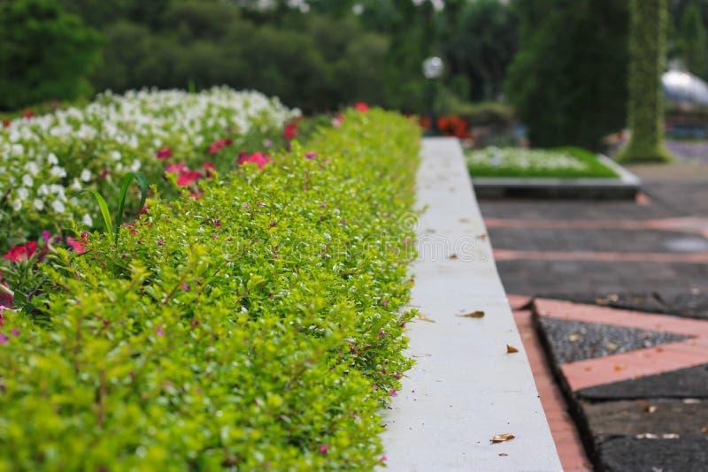 Небольшие красочные цветки в саде стоковые фотографии rf
