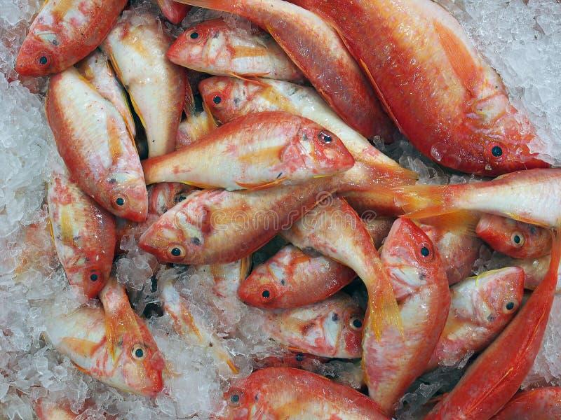 Небольшие рыбы барабульки, рыбные базары Сиднея, Австралия стоковые фото