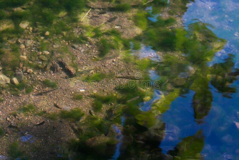 Небольшие рыбы в потоке воды в джунглях стоковая фотография