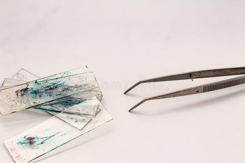 Небольшие стекла с частями гистологических биопсий на белой предпосылке Небольшая струбцина металла стоковая фотография