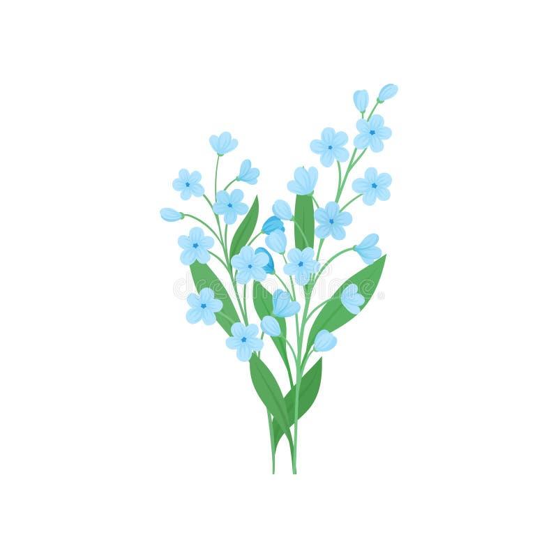 2 небольших ветви голубых цветков незабудки Красивый зацветая завод Детальный плоский дизайн вектора иллюстрация штока