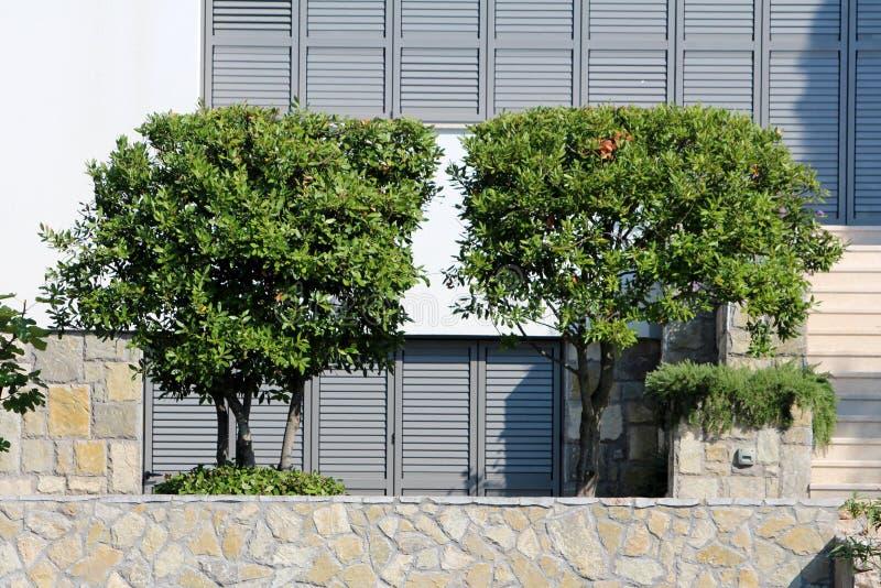 2 небольших декоративных дерева с зелеными листьями засаженными за традиционной каменной стеной с закрытыми шторками окна в предп стоковая фотография rf