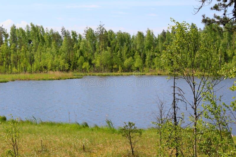 Небольшое озеро в лесе среди деревьев стоковые изображения