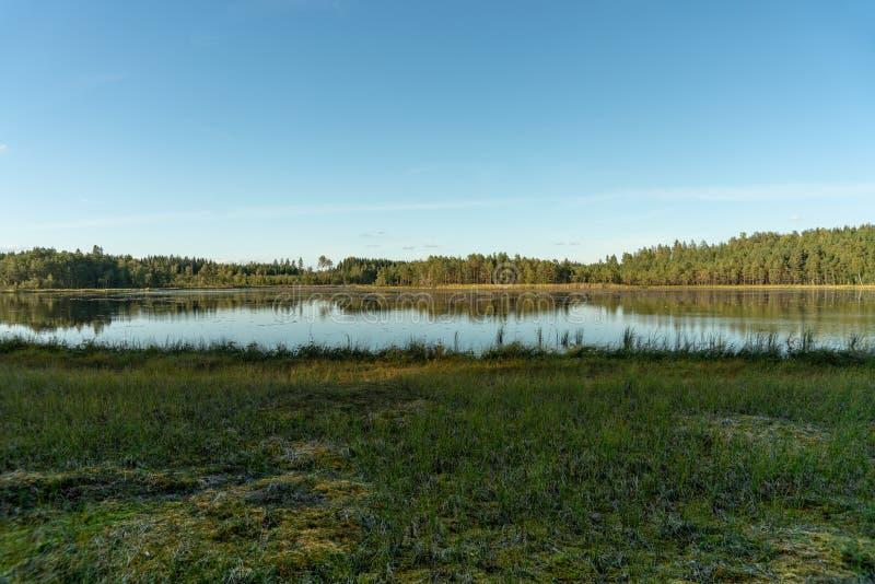 Небольшое озеро или Тарн в Швеции вполне lilyбелой воды стоковое фото rf