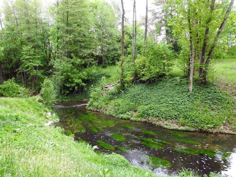 Небольшое река и красивые заводы, Литва стоковое фото
