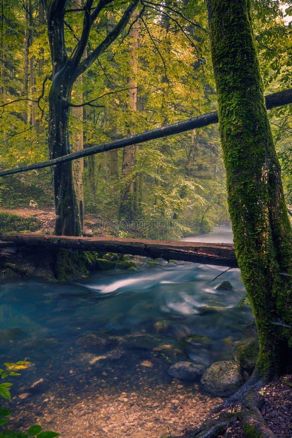 Небольшое река пропуская через лес со скрещиванием деревянного моста оно использовало hikers стоковая фотография