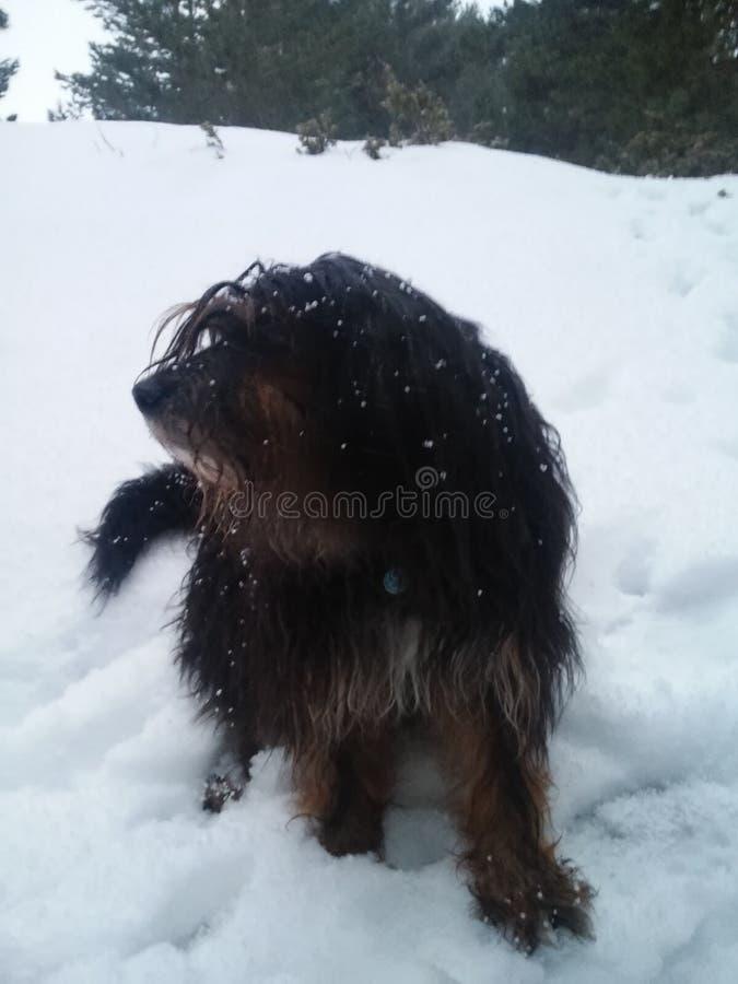 небольшое ewok снега стоковая фотография