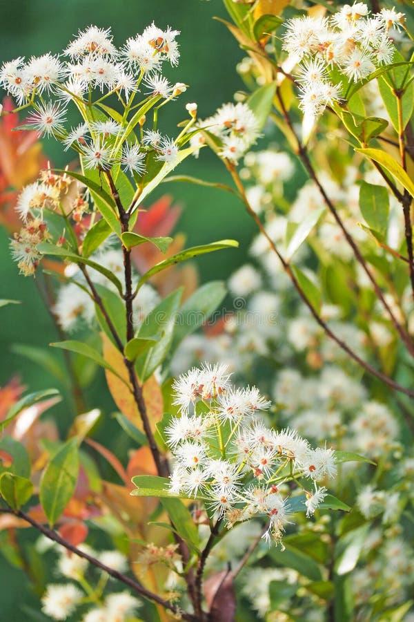 Небольшой белый цветок с зеленой предпосылкой дерева стоковая фотография