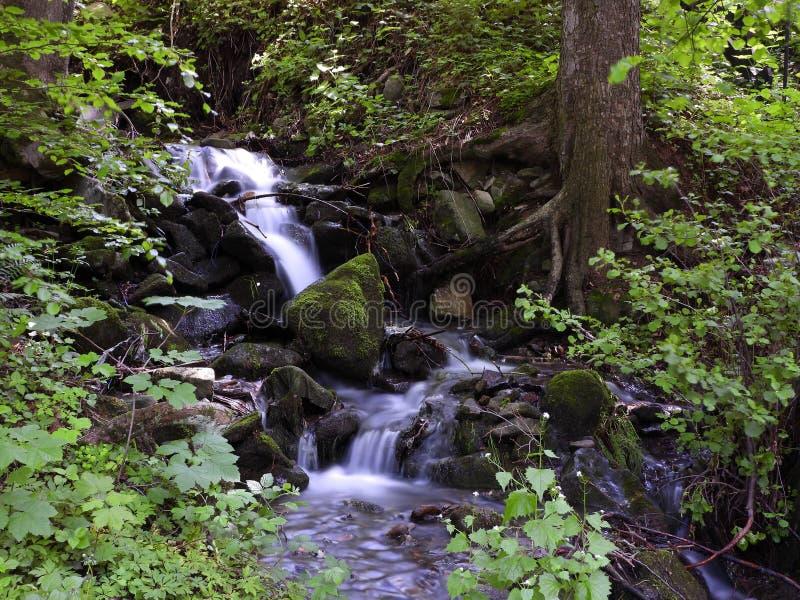 Небольшой водопад в лесе стоковые фотографии rf