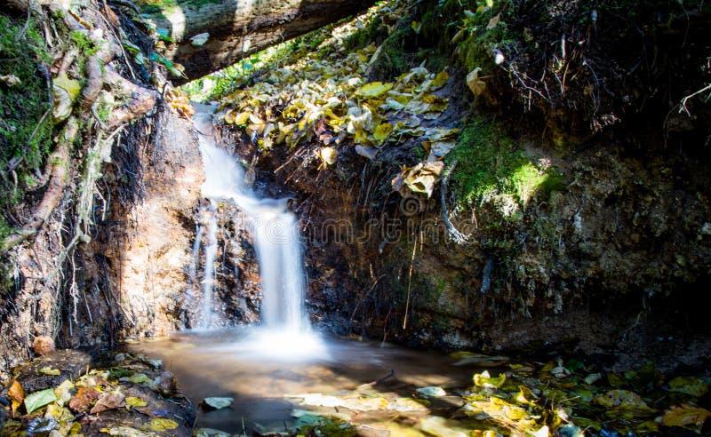 Небольшой водопад который в лесе стоковое изображение rf