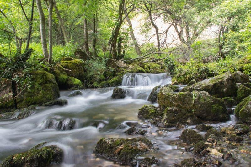 Небольшой каскад весны между утесами и деревьями, горами Сербии стоковые фотографии rf