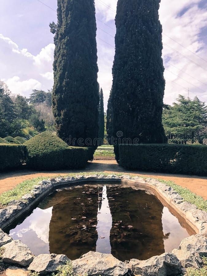 Небольшой красивый домашний фонтан, пруд в саде задворк в конструкции высоких деревьев, кустов, зеленых thujas, лиственниц стоковые фотографии rf
