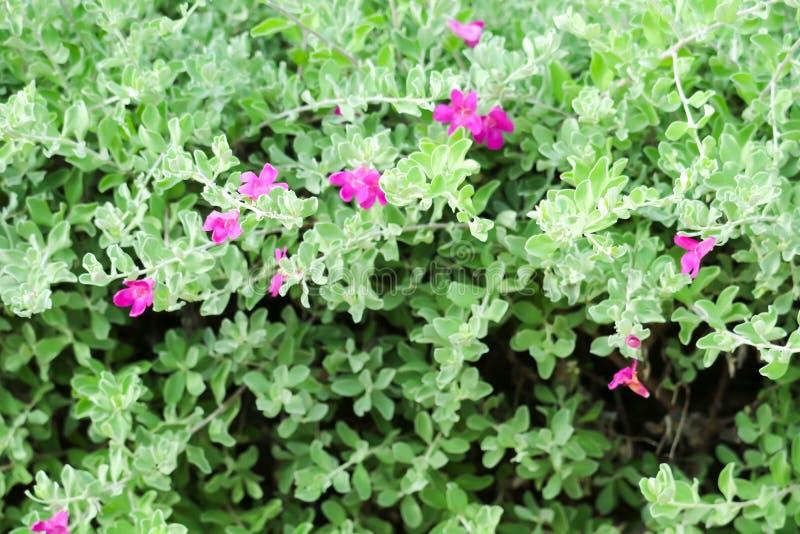 Небольшой кустарник стержни ломают много ветвей, они настроил плотный куст стоковое фото