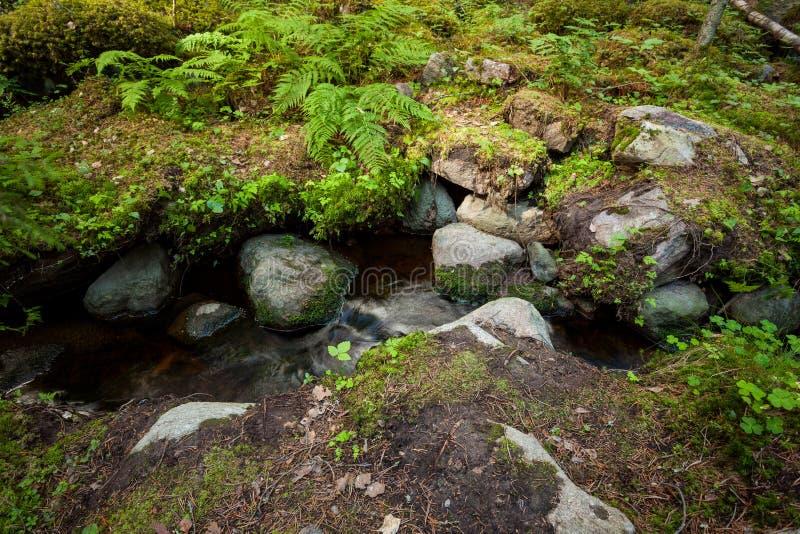 Небольшой поток в сочном лесе на лете стоковое изображение rf