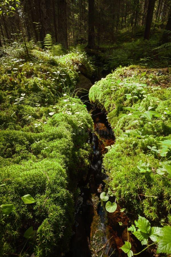 Небольшой поток в сочном лесе на лете стоковые изображения rf