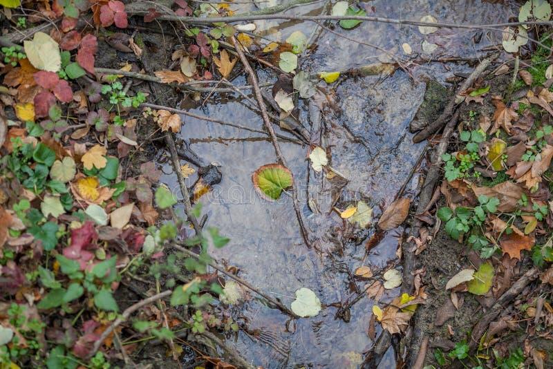 Небольшой поток заводи с ветвями и листьями в нем стоковое фото rf