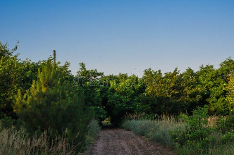 Небольшой путь леса среди чащ дикой акации Дорога водя к The Creek Спорт утра jogging в древесинах стоковые фотографии rf