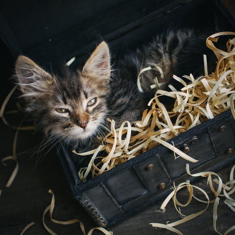 Небольшой, пушистый котенок лежа в коробке стоковые изображения