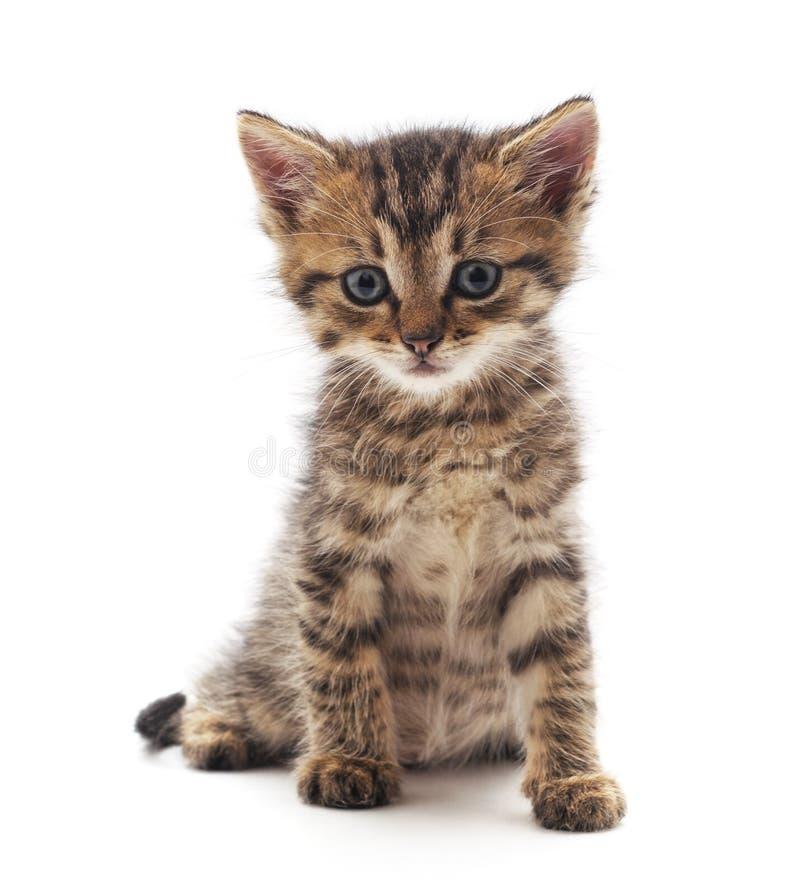 Небольшой серый котенок стоковое изображение