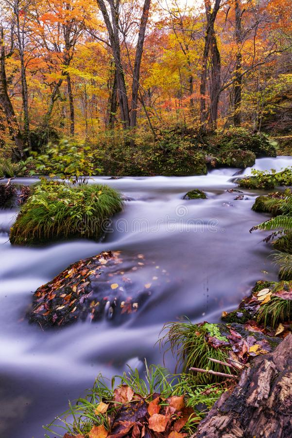 Небольшой сценарный водопад на потоке в осени, Aomori Oirase, Японии стоковые изображения
