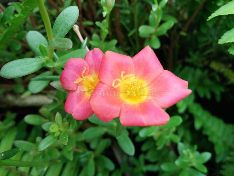 Небольшой цветочный сад в красивых ярких цветах стоковое фото rf