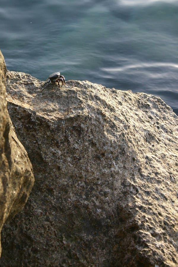 Небольшой черный краб на волнорезе морем стоковое изображение rf