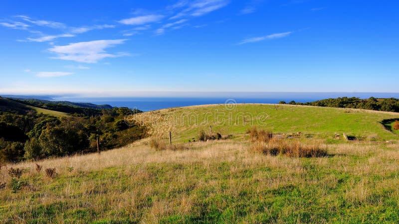 небо голубой травы поля сценарное стоковое изображение