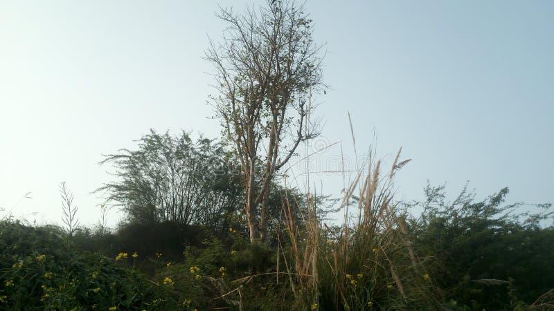 Небо дерева стоковые фотографии rf