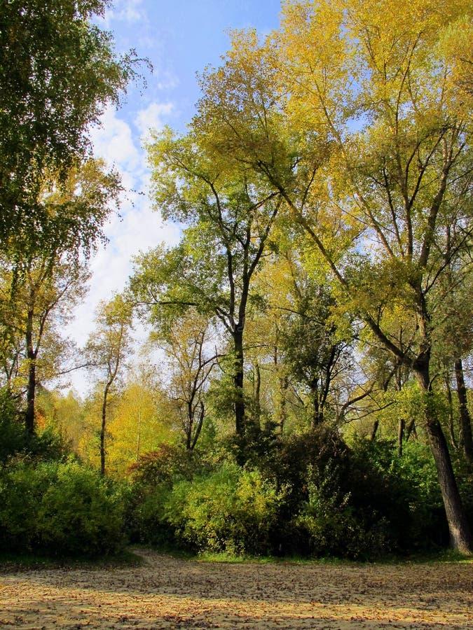 Небо леса Облака стоковая фотография