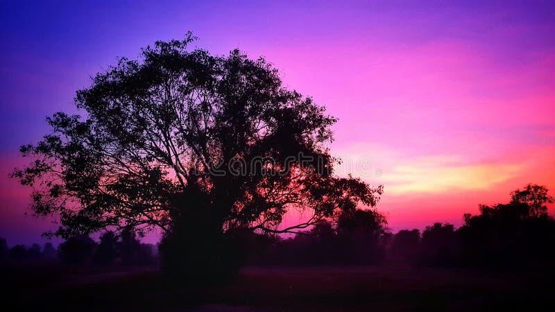 Небо естественный Таиланд дерева стоковое изображение rf